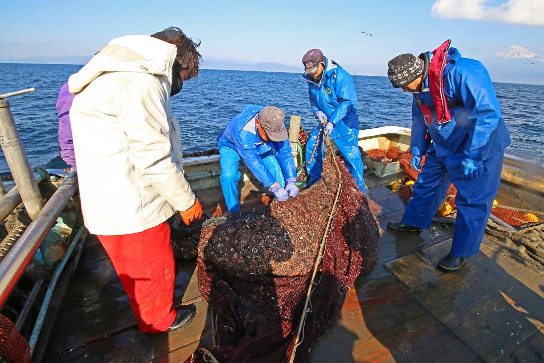 底曳き網漁に乗船してきました! | ブルーコーナージャパン